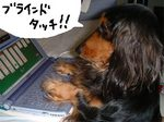 Noo_PC.jpg